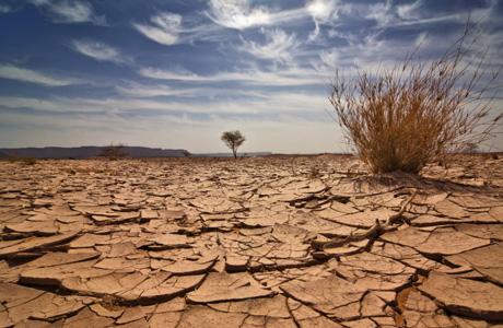 Dry-ground1