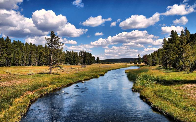 River_Between_Long_Trees