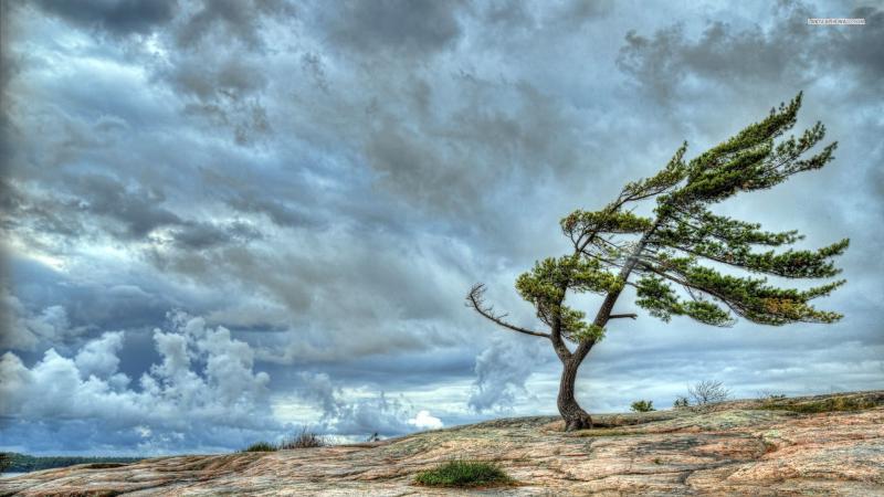 Wind-trees-wallpaper-4