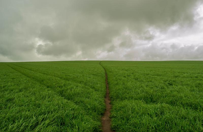 Narrow-path-in-the-eternal-field