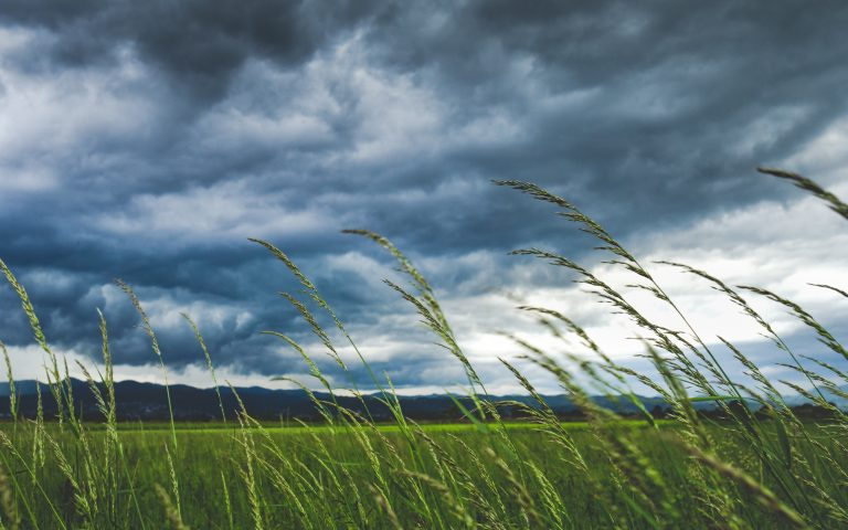 Grass-tips-wind-grey-sky-768x480