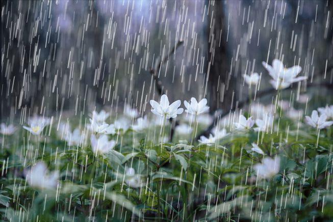 Raindrops-plants-smell.jpg.653x0_q80_crop-smart